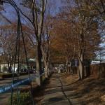 筑波大構内の並木道