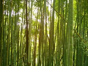西光院への上り坂の竹林