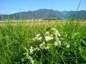 白い花と宝篋山
