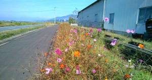 坂田園芸の裏手の花