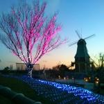 夕方の霞ヶ浦総合公園の風車