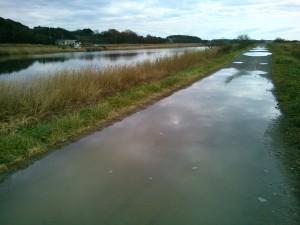 沼岸の道路だけ水溜りだらけ