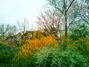 土浦市内とある場所の花々3