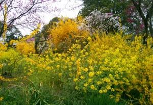 土浦市内とある場所の花々1