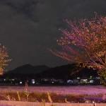 夜の筑波山と自転車道