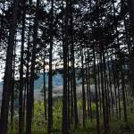 林立する木立と山の稜線