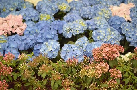 あじさいなどの花々