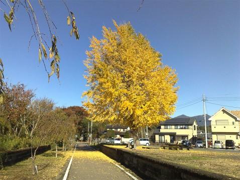 紅葉のりんりんロードの旧小田駅