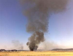 美浦の野焼き