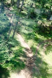 ゴンドラから見えたMTBの道