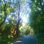木漏れ日の坂ランと大竹海岸へのサイクリング