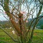 狂い咲いていたりんりんロードの風景(2014年11月初め)