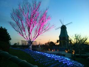 夕方の霞ヶ浦総合公園の風車-木もライトアップ