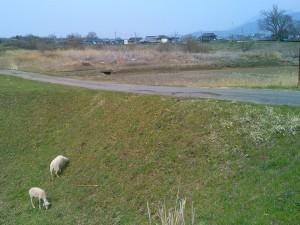 ヤギと宝篋山とその背後に筑波山