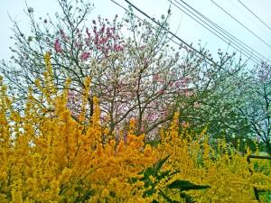 土浦市内とある場所の花々2
