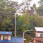 土浦二中の近くのがけに見えた神社