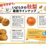 ツールド・梨・IBARAKI
