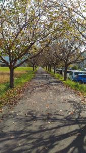 北条の秋の並木